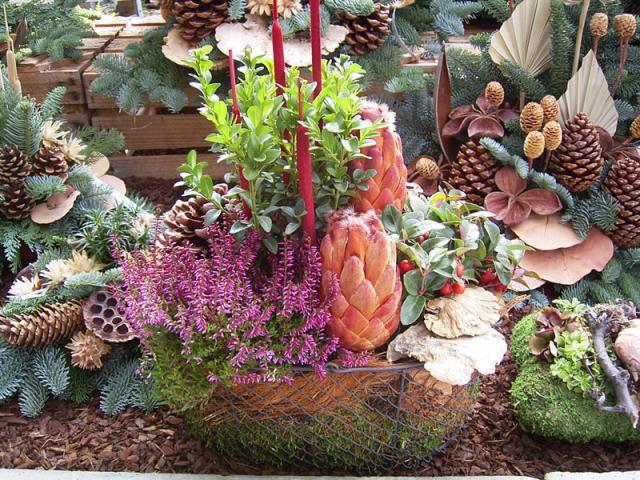 bepflanzter Drahtkorb, mit Exoten ausgesteckt